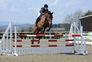 16.3 HH 9YR OLD IRISH BAY GELDING, THE PERFECT GENTLEMAN