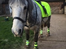 Loving 11year old cob - Sharer wanted
