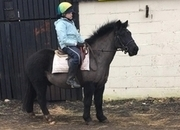 All Rounder - 12.2 hh - Norfolk