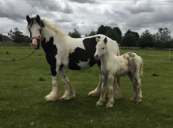 Lightweight - For Adoption - 13 hh - West Yorkshire