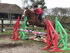 All Rounder - Mare - 15.3 hh - Norfolk