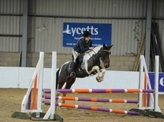 All Rounder - Mare - 15.1 hh - Norfolk