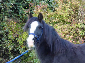 Lightweight - For Adoption - 13 hh - South East Yorkshire