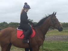 16. 1 TB Gelding for sale