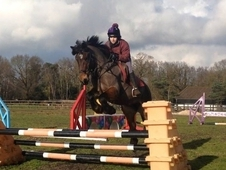 9 year-old - Connemara - Cobs - Mare - 14. 2 hh - Norfolk
