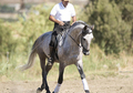 Sweet Andalusian PRE Dressage Gelding