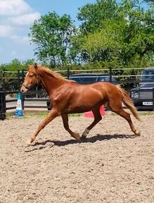 Foals For Sale Horsemart