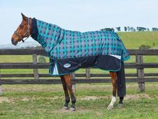 Top of the range rug, the NEW - UK
