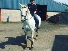 REDUCED needs to go! 15.0hh Irish mare for sale Manchester
