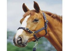 Strong nylon headcollar with s - UK