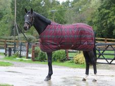 The Saxon PP Stable rug is a t - UK