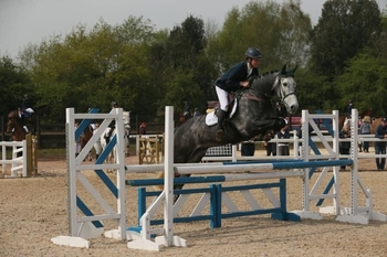 5 year-old - All Rounder - Gelding - 16 hh - Oxfordshire