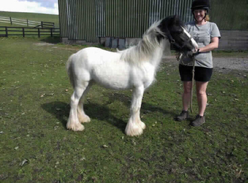 Lightweight - For Adoption - Gelding - 12.2 hh - North Yorkshire