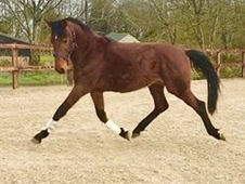 3 year-old - All Rounder - Stallion - Wiltshire