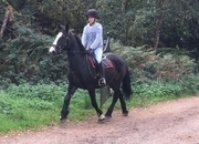 All Rounder - Mare - 14.3 hh - Norfolk