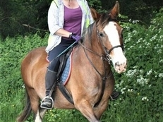 LOVELY HORSE FOR LOAN - LITTLE BOMBPROOF COB MARE 14.2HH - STAY AT CURRENT YARD IN EAST KENT