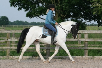 10 year-old - Irish Sport Horse - All Rounder - Gelding - 16.1 hh - West Yorkshire
