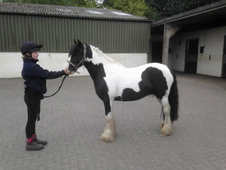 4 year-old - Cob - Cob - ***Gender Unknown*** - 12. 2 hh - Durham
