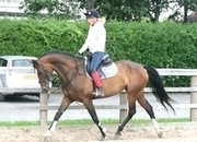 9 year-old - Warmblood - All Rounder - Mare - 16.2 hh - West Yorkshire