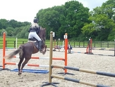15. 2HH MARE FOR SHARE/LOAN
