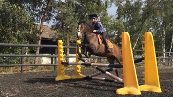 5 year-old - All Rounder - Mare - 13.3 hh - Norfolk