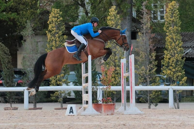 7yo GELDING-CONNOR VIII