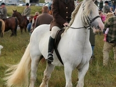 'Duke'-14.2hh Gelding- Bomb Proof