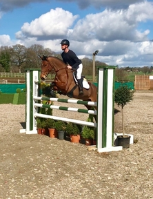 5 year-old - All Rounder - Mare - Oxfordshire