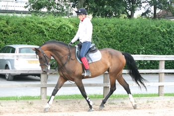 10 year-old - Warmblood - All Rounder - Mare - 16.3 hh - West Yorkshire