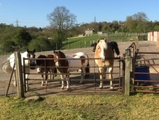 Horses for loan share