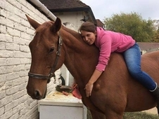 Two Gorgeous Horses for loan Bristol both Barefoot