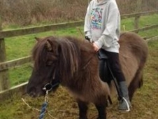 Pony Shetland Mare with saddle £395