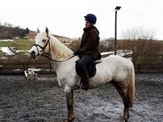 5 year-old - Connemara - All Rounder - Gelding - 15 hh - Powys