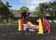 All Rounder - 16.1 hh - Norfolk