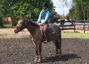 All Rounder - 14.2 hh - Norfolk