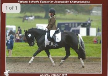 'Billy'-A Super All-rounder / Competition Pony