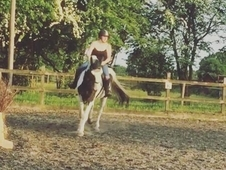 Stunning 17. 2hh Gelderlander for share