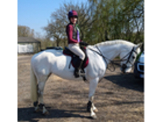 Fun, confidence-giving Hunter / Showjumper registered Irish Sports Horse