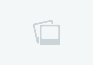16.3hh Safe Hunter 6yrs old