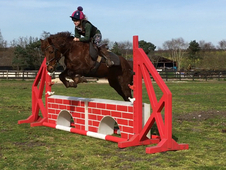 11 year-old - All Rounder - Mare - 13. 3 hh - Norfolk