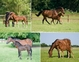2009 WEATHERBY TB BROODMARE