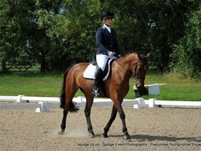 15. 3h Throughbred X, 8yr old, Bay, Gelding