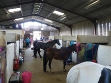 Weekend Stable Hand/Groom Position Available in Friendly Riding S...