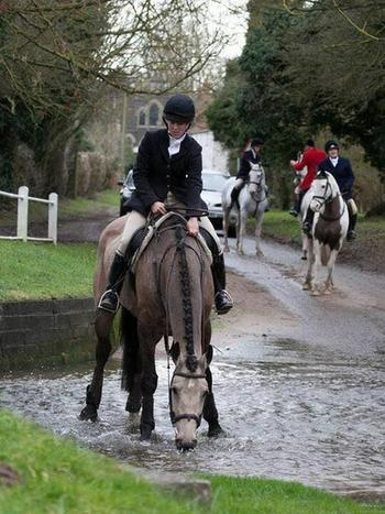 16.2hh Irish Hunter