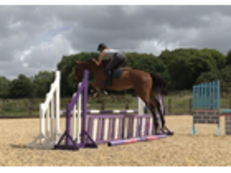 3 British Bred Performance Horses-Totally Unspoiled