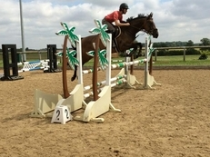 15.2hh Super smart 6yr old