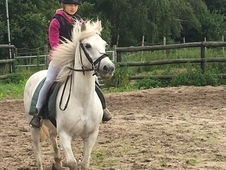 All Rounder - 13 hh - Norfolk