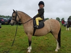 Registered sec a leadrein pony