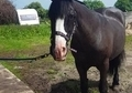 14. 3HH COB MARE FOR FULL LOAN