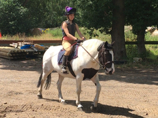 Cobs - 15.1 hh - Norfolk